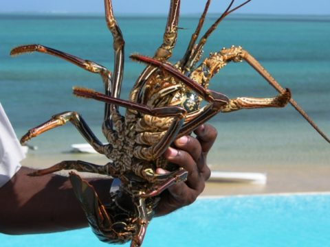 "alt=""mauritius-urlaub a lobster in his hand"">"