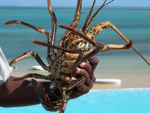 """alt=""""mauritius-urlaub a lobster in his hand"""">"""